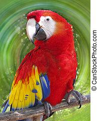 Macaw on green circular background