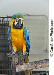 Macaw.
