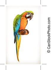 macaw, vetorial, papagaio, ilustração