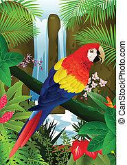 macaw, vogel, backgroun, wasserfall