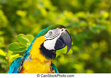 macaw, wildness, green-winged
