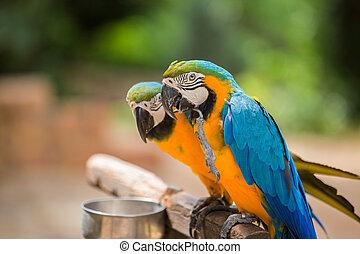 macaws