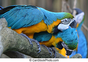 Photography of macaws in love