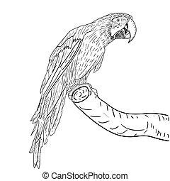 macaws., vektor, illustration.