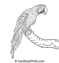 macaws., vettore, illustration.