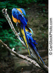 macaw?sitting on a branch