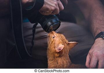 macchina fotografica, gattino, amori
