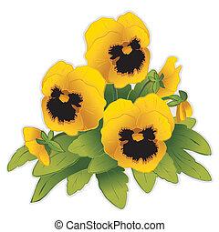 maceška, květiny, zlatý