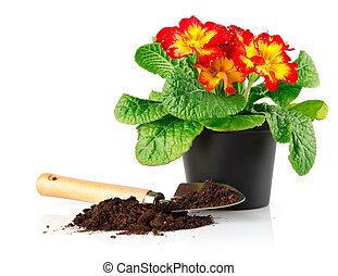maceta, con, flores rojas, y, tierra, en, pala