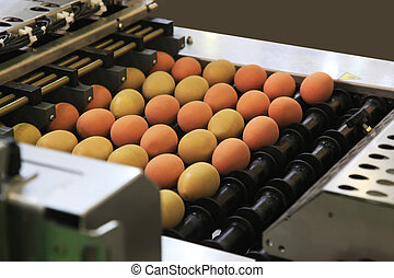 Machine for packing eggs
