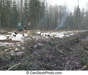machine loads logs - special forest management machine loads...