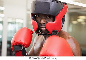 macho, boxeador, postura, defensivo
