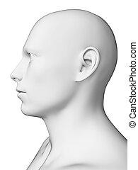 macho branco, cabeça