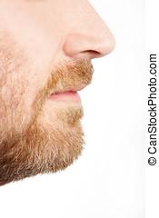 macho, cara, perfil, con, barba