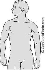 macho, figura humana, esboço