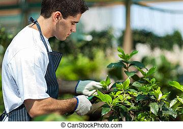 macho, jardín, trabajando, jardinero