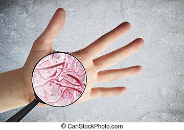 macho, mão, germes
