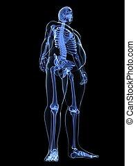 macho, sobrepeso, esqueleto, -