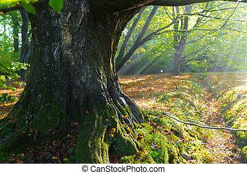 maciço, tronco árvore
