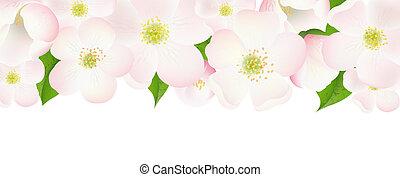 macieira, flores, borda