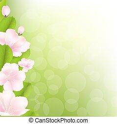 macieira, flores, com, bokeh