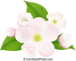 macieira, flores