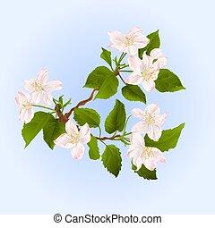 macieira, ramo, com, flores, vector.eps