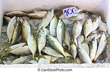 Mackerel fish 2