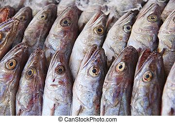 Mackerel fish on local market