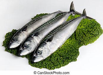 mackerel on a leaf vegetable