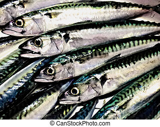 Overhead view of a row of mackerels.