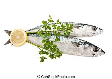 mackerels with parsley and lemon isolated on white