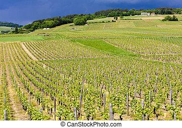 maconnais, viñas, cote, francia