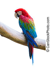 macow bird