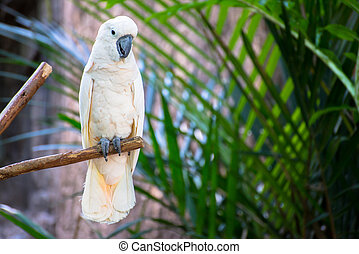 macow parrot