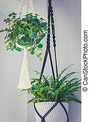 Hand made macrame plant hanger with ivy and fern, home interior decoration