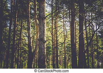 macro, árboles de pino, filtrado