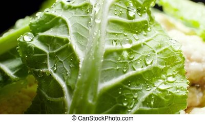 Macro 4k video of fresh cabbage leaves covered with water ...