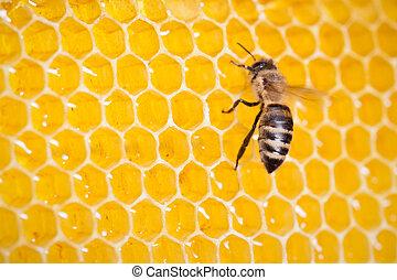 macro, abeja, panal