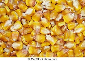 macro, achtergrond, maïs
