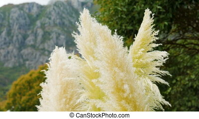 macro as the plant cane blossomed in the feathers