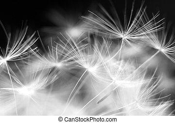 Macro beauty dandelion, details