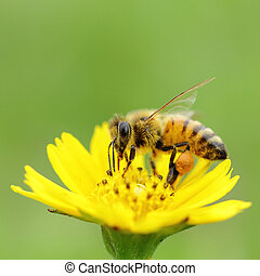 Bee insect - Macro Bee insect fly to the outdoor in the...