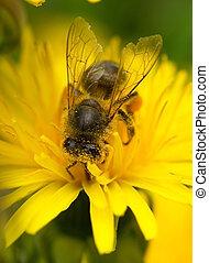 macro bee on a flower