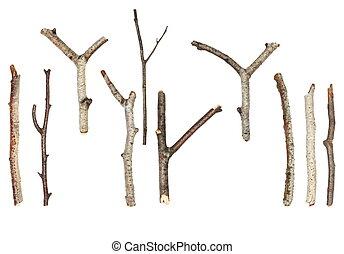 macro, blanc, branches, isolé