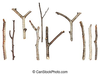 macro, branches, isolé, blanc