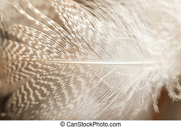 macro, canard, plumes, fond