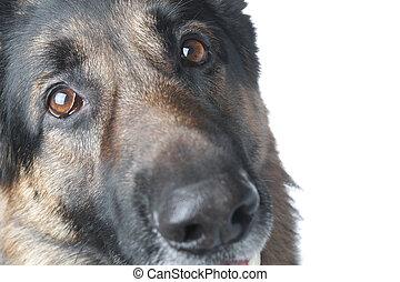 macro, chien policier