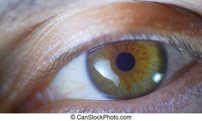 Macro Close-up Male Human Eye Blinking. Slow motion