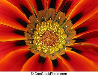 Macro close up of a color